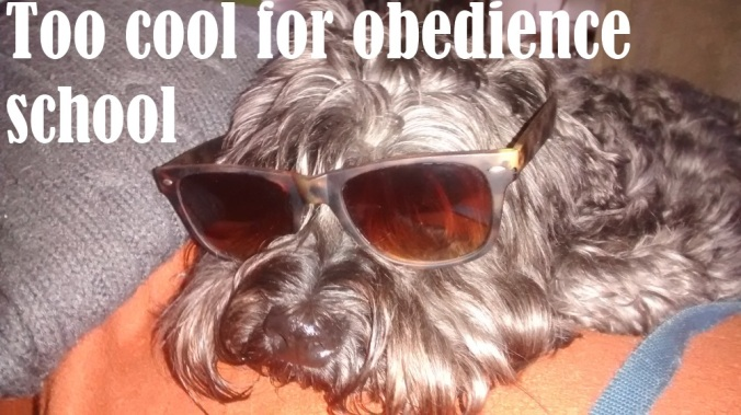 Too cool for obedience school